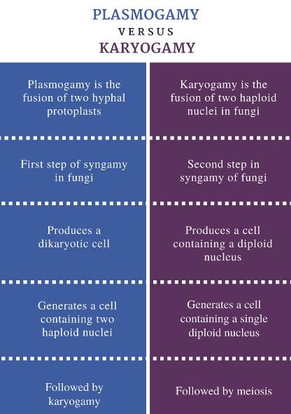 Plasmogamia vs cariogamia